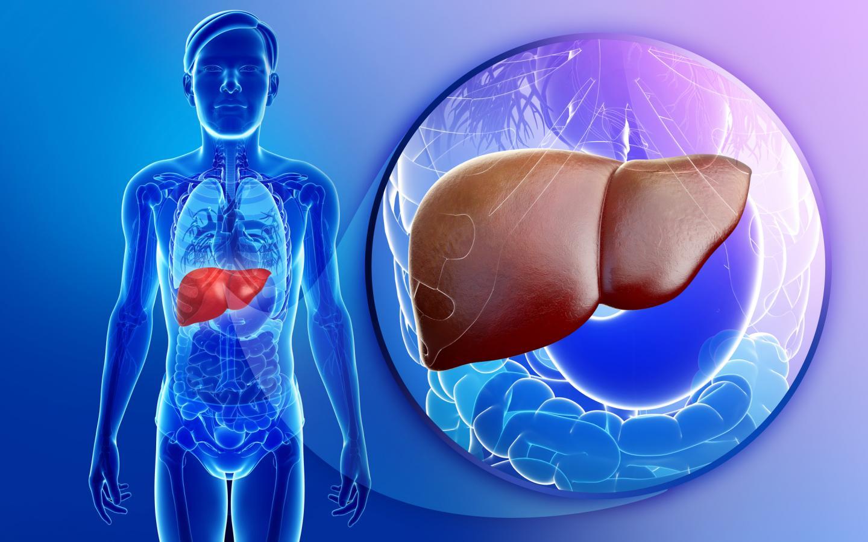 Ортотопическая трансплантация печени