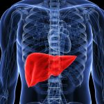 Трансплантация печени у пациентов с гепатоцеллюлярной карциномой