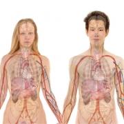 Противовирусные препараты совершают революцию: органы от доноров с гепатитом C возможно использовать для трансплантации